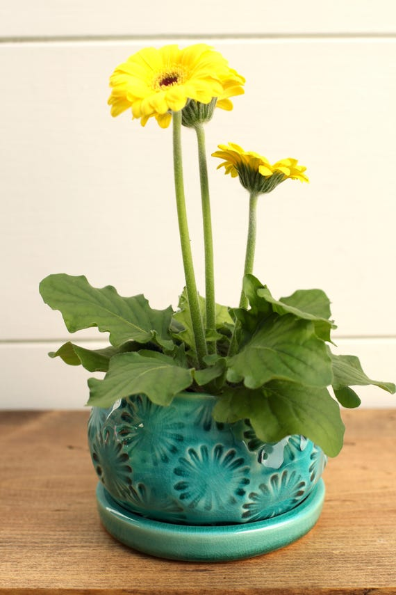 turquoise planter with saucer