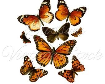 Butterflies Print, Butterflies Clipart, Vintage Illustration, Wall Decor, Digital Image Printable, INSTANT DOWNLOAD - 1928