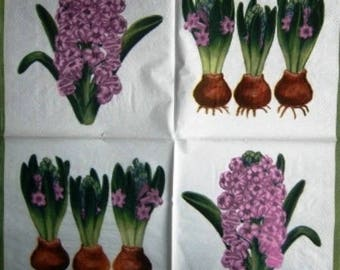 """TOWEL in paper bulbs and Hyacinths """"Molca"""" #F006 flowers"""