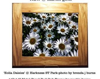 Daisies on metal panel