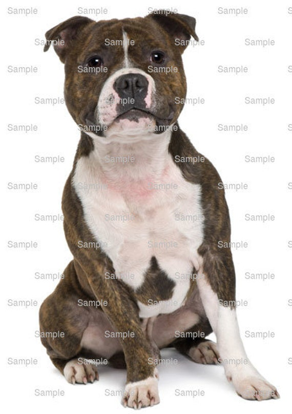 Staffordshire BullTerrier Dog Birthday - Edible Cake and Cupcake Topper For Birthday's and Parties! - D6744
