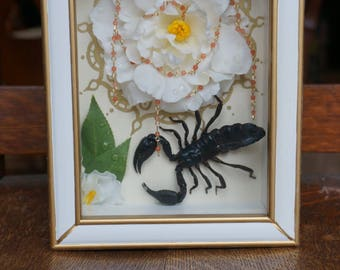 Scorpion Rose Insect Frame Art