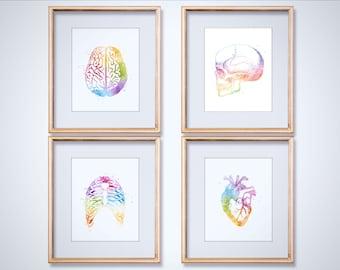 Watercolor Anatomy Art Print Set - Med Student Gift - Anatomy Decor - Human Anatomy - Medical Gifts - Heart Anatomy - Medical Office Decor