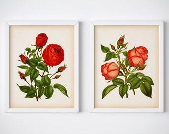 Vintage rose print set, Set of 2 rose prints, Rose art, Instant download rose print, Rose wall art, Home wall art, Rose printable, Digital
