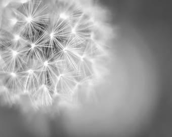 Black & White Nature Photography, Wall Art, Fine Art, Fine Art Prints, Nature Photos, Flowers, Dandelion