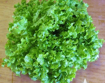 Green Salad Bowl Lettuce Heirloom Seeds - Non-GMO, Open Pollinated, Untreated