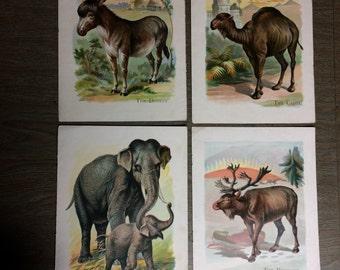Lot of Vintage Paper Ephemera, 4 Animal Prints