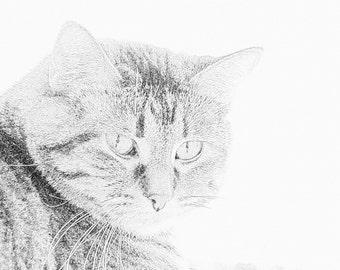 Tiger cat pencil sketch