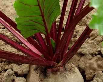 Beetroot Detroit Dark Red 500 seeds 5 grams