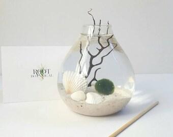 Japanese Marimo Aqua Terrarium, Teardrop Moss Ball Terrarium, Home Decor, Office Decor, Gift