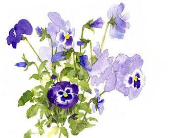 Violet Pansies - Archival Print