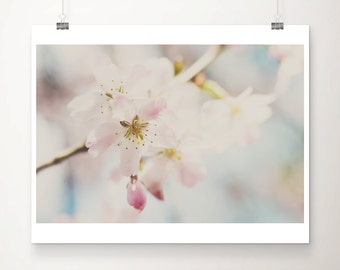 apple blossom photograph spring photograph pink flower photograph nature photography pastel home decor blossom tree print