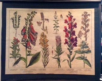 Vintage Educational Plate Botanical Print