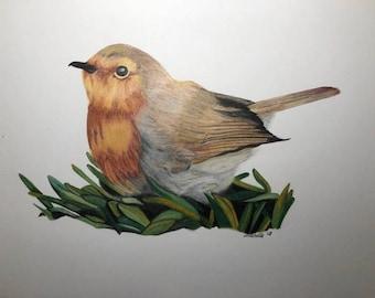 """Original Framed artwork """"Nesting Robin"""" in Polychromo colour Pencils"""