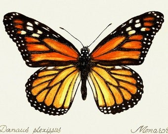 Monarch Butterfly Print from gouache painting