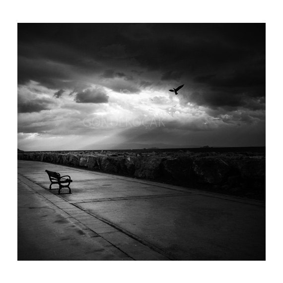 Items similar to black and white photography art photography fine art photography print black decor alone birds wall art sky print 12x12 inch on etsy