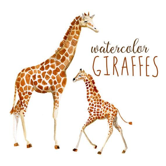 watercolor giraffes zoo animals watercolor giraffe clip art africa rh etsystudio com baby giraffe pictures clip art Tiger Clip Art