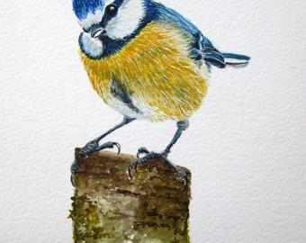 ORIGINAL watercolour painting of a Bluetit bird by Josephine Bell