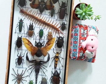 Mix Real Rare Big Set Bugs Insect Insects Framed Box Display Taxidermy Centipede Spider Gideon Jewel Dung Beetle Cicada Scorpion Entomology