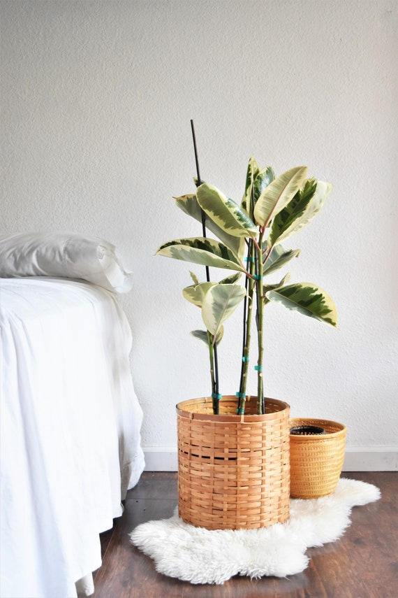 large woven bamboo rattan basket planter / flower pot