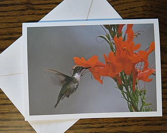 Ruby throated hummingbird female, Bird and Flower, Photo Note Card, Frameable, Greeting Card, Thinking of You, Thank You