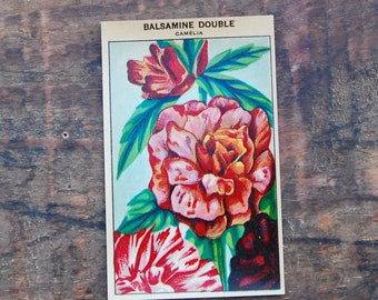 Original Vintage Flower Seed Label, Lithograph, French, Balsamine New Old Stock