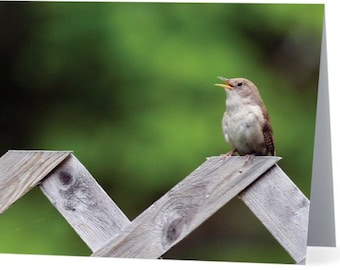 Backyard Birds Notecards & Envelopes