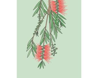 Australian Bottlebrush flower print