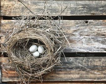 Farmhouse Chic Wall Art, Nature Photography, Modern Rustic Home Decor, Bird Nest Print, Spring Wall Decor Blue & Brown Nursery Art | 'Nest'