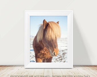 Icelandic Horse Photograph, Horse Photography, Animal, Iceland, Travel, Horse Picture, Horse Art, Golden Brown, Fuzzy Horse, Wild Child