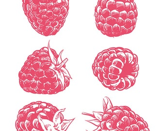 80% Off Sale Drawing raspberry isolated. Hand drawn fruit vector. Berry with clipping path. (EPS, JPG)