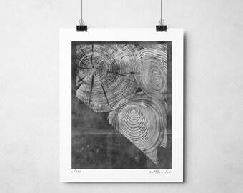 Bristlecone Pine Nevada Print