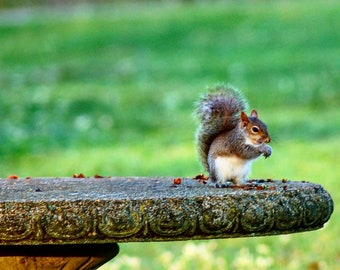 Squirrel picnic in the park.