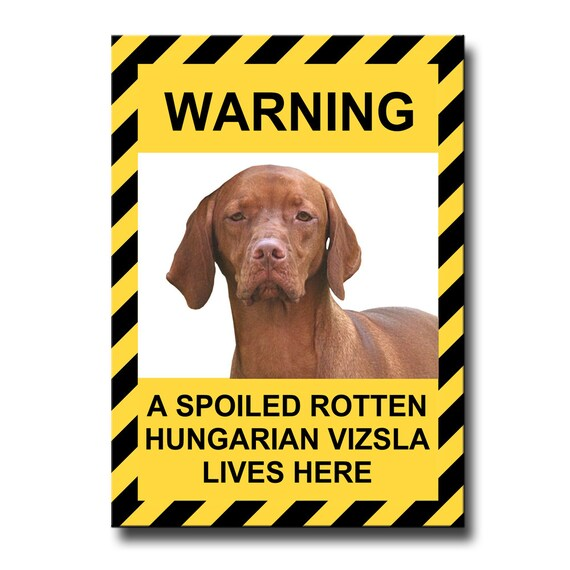 Hungarian Vizsla Spoiled Rotten Fridge Magnet