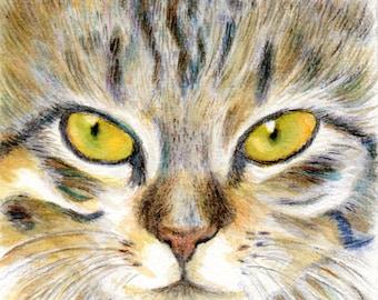 cat art print watercolor pencil drawing  - The Cat - small wall art desk decoration dorm room home decor cat lover gift