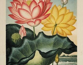 Water lilies art print vintage flower art print Botanical Art Prints Home Decor Wall art flower Victorian art Garden Wall Art French prints