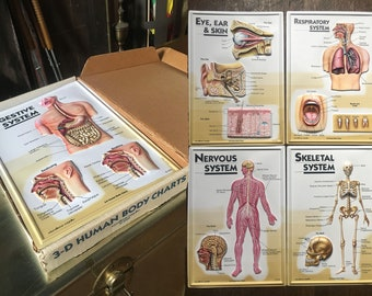 Set of 7 vintage 3D human body charts medical anatomy photos in box oddities illustrations