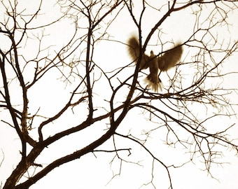 Dove Flight-surreal ethereal nature altered photograph bird in flight  tree branches