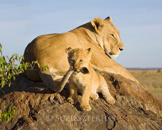 Lion Baby Playing Photo Print Mom And Baby Animal