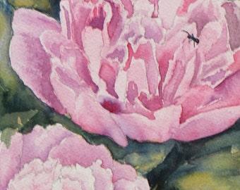 Spring Flower Peony Nature Watercolor Painting - Original Art