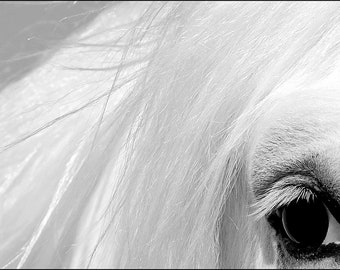 Horse's Eye (Set of 8 Note Cards)