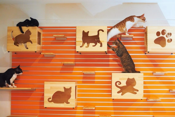 Hanging Cat Shelves