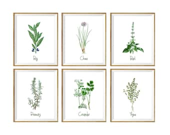 Botanical Print, Botanical print set, botanical SET of 6, botanical chart, botanical print vintage, botanical illustration, 8x10, 11x14, 5x7