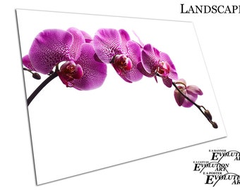 Large Purple flower Orchid beautiful flowers Poster Print X1358