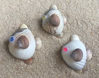 Sea shell Fish Set Animal Beach Décor Handmade Seashell