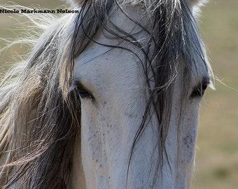 Wild Mustang Mare ~ Wild Horses ~ Equine Art ~ Equine Photography ~ Wild Pferde ~ Home Decor