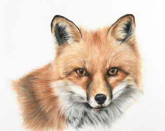 fox animal wall art, nursery fox decor, forest nursery art, forest art nursery, woodland fox poster, poster woodland fox, baby shower