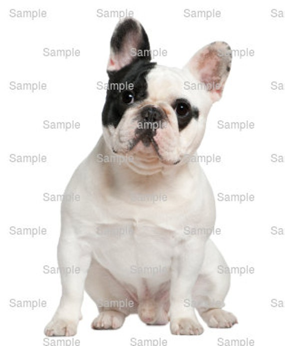 French Bulldog Dog Birthday - Edible Cake and Cupcake Topper For Birthday's and Parties! - D6644