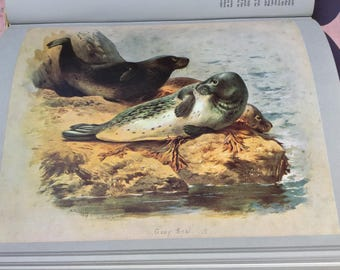 Thorburn's Mammals, a vintage book with stunning plates.