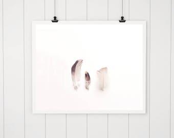 White Feather photo, Farmhouse Decor nature print, minimalist art, feather photography, feather print, feather art print, modern art print